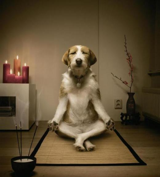 perro meditando animal